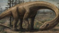 Ce nouveau dinosaure s'appelle