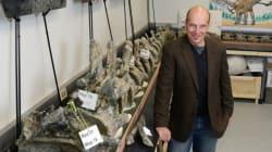 Découverte d'un dinosaure: le Dreadnoughtus schrani, pesant près de 60 tonnes