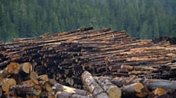 Canada The World Leader In Deforestation, Study