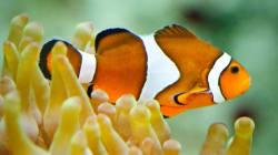 Ne faites pas plaisir à vos enfants en mettant Nemo dans un