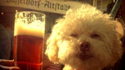 Ce chien a voyagé dans le monde