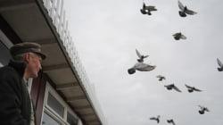 6. 'No se afligen las palomas'