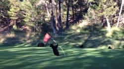 Cet ourson n'a pas tout à fait compris les règles du golf