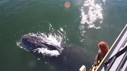 WATCH: Dozens Of B.C. Whales Leave Boaters