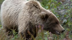 Northwest Territory Hunter Dies After Grizzly