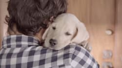 Budweiser met à profit la relation entre un maître et son chien dans une publicité contre l'alcool au