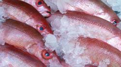 Fish Mislabelled For 'Better