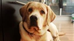 Un año dedicado a educar un futuro perro
