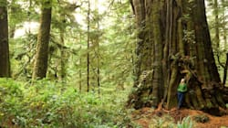 LOOK: B.C.'s Big Beautiful Trees Are