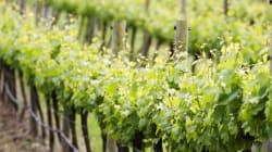 Les vins du Chili d'hier, d'aujourd'hui, et de