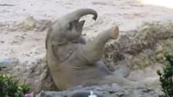 Baby Elephant's Fall And Rescue Is The Only Pick-Me-Up You