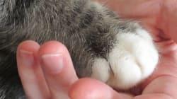 3 razões para comemorar o Dia Mundial dos Animais nas
