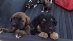 20 Puppies Found Abandoned In