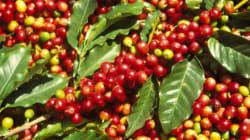 Caffè 100% sostenibile e formazione dei
