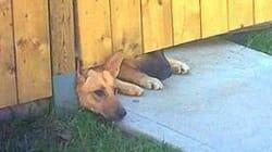 Les chiens du soldat tué l'attendent