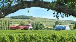 Aide aux vignerons: les producteurs