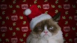 Découvrez la 1ère bande-annonce de Grumpy Cat, le