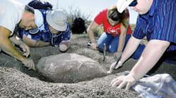 Un randonneur a découvert une tortue de 90 millions