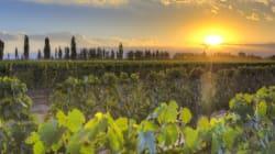 Acteurs insolites du vin: Pascal Bobillier-Monnot et la