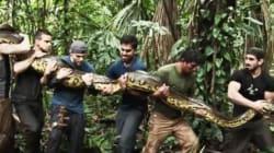 Avalé par un serpent, l'émission qui fait