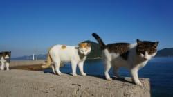 瀬戸内の猫島めぐり。日なたぼっこする猫に癒される【画像集】