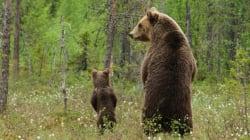 Ces deux ours ont bien fait rire les