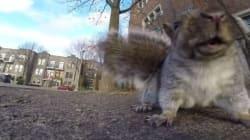 Regardez donc ce que va faire cet écureuil avec cette