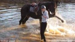 Ce cheval découvre le concept de la bataille