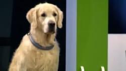 VIDÉO - Ce chien n'a pas tout compris à ce qu'on lui a