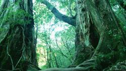 深刻な森林火災を防いで豊かな自然を守る監視システムのココがすごい