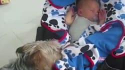 Ces chiens recouvrent eux-mêmes bébé d'une