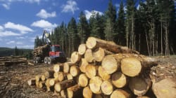 Canada's Largest Forestry Company Slashes Newsprint