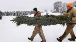 Le marché du sapin de Noël en