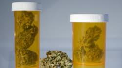 'Maconha medicinal: estamos prontos para um