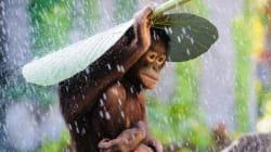 Les merveilles de la nature et du monde en 15 clichés du Sony World Photography Awards