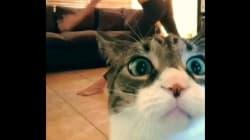Les 14 meilleures vidéos de chats de