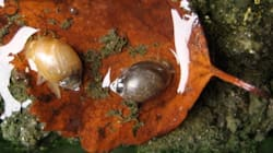 Man Bathes With Banff Snails, Could Face $75,000