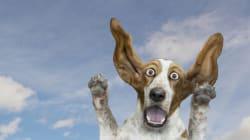 Stop ai botti di Capodanno per salvare 5.000 tra cani e