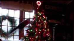 Chats et sapins de Noël: le combat fait rage