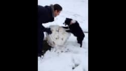 Un chiot «participe» à la création d'un bonhomme de neige