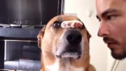 Ce chien est plus discipliné que vous