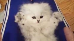 Ce chaton imite son