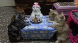 Un chat peu impressionné par son repas d'anniversaire