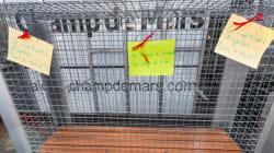 À Angoulême, les grilles anti-SDF démontées...