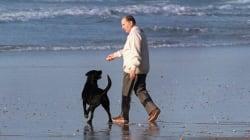 Trois anecdotes sur les chiens des