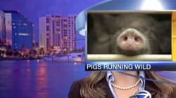Les meilleurs bloopers de bulletins de nouvelles