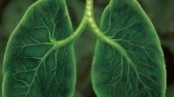 Brasil: pulmão do mundo ou fumante