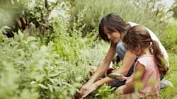 Gardening Newbie? 5 Expert Tips To Get You
