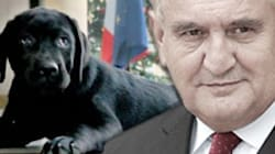 Raffarin adresse ses vœux au chien de