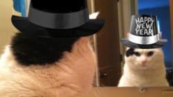 Les 11 résolutions de votre chat pour